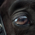 Inside the Mind of a Horse