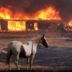 Disaster Emergency Preparedness