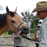 AHI, the Horse Whisperer, and Seven