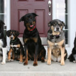 Euthanasia, A Vet's Perspective (Part Four)