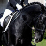 Does Your Horse Respect You? Part 3 in a Series