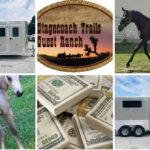Equine Scams! Beware! Part Two