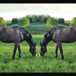 Embryo Transfer & Cloning