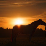 Fearful in the Saddle? (Part 3)