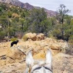 The Middlemarch Trail at Cochise Stronghold (& Other Trails)