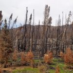 Grand Lake, Colorado... After the Wildfire